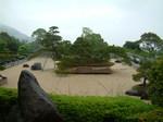世界最大の松の盆栽